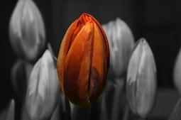 orange-135931_640-255x169